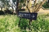 南京有这样一片世外桃源 90%的人都没去过
