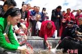 【图文】2017年青海湖将放流1100万尾旗舰物种湟鱼